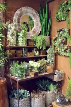 Tiered Arrangement of potted succulents and other plants~