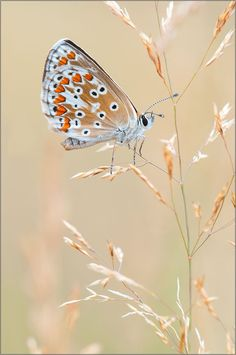 butterfly by Andy Mr.owetz on 500px