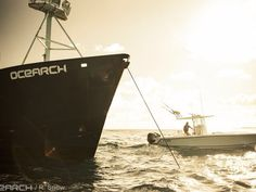 Expedition Brazil. Follow your favorite shark on the OCEARCH Global Shark Tracker powered by CATERPILLAR.