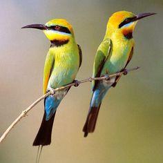 Dado que las aves son animales muy visibles y muy comunes, los humanos han tenido una intensa relación con ellas desde el comienzo de la humanidad.
