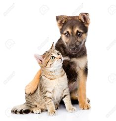isolated on white background , Dog Crossbreeds, Professional Business Cards, Fox, Cats, Animals, Google Search, Gatos, Animales, Kitty Cats