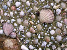 Fountain with seashells #diy