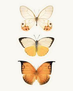 Large Butterfly Print - Large Wall Art by Allison Trentelman - Rocky Top Studio