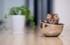Kitten cup!