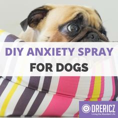 Does your dog get the blues when you leave him home alone? This DIY Anxiety Spray for Dogs is perfect to help them relax while you are out of the house.
