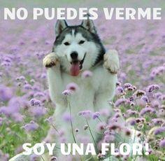 Camuflaje nivel flor #imagendeldia - Cachicha.com