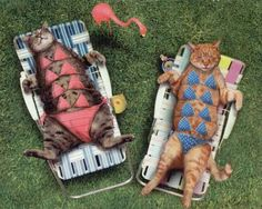Follow the pic fo more Funny cats in bikinis having sunbath