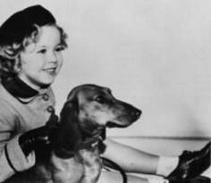 Shirley Temple + Doxie