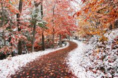 Photograph Two Seasons by Ben Heine on (Montréal) Beautiful Forest, Beautiful Places, Pretty Pictures, Cool Photos, Ben Heine, Autumn Scenery, Parcs, Color Of Life, Mother Nature
