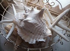 discoveries from the sea...