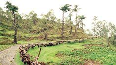 A road to the jungle Timor Leste, Archipelago, Darwin, How To Raise Money, Portuguese, Adventure Travel, Colonial, To Go, Australia