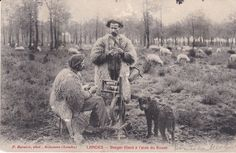 CP114 LANDES BERGER FILANT AVEC UN ROUET MOUTON CHIEN in Collections, Cartes postales, France: Aquitaine | eBay
