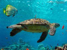 Animales Marinos | animales marinos