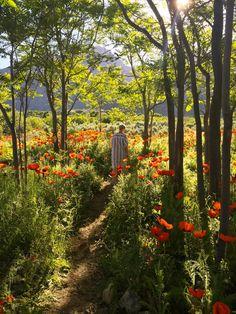 Path through a poppy field (Utah) by Brittany Jepsen and Anna Killian