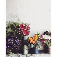 marimariamonday本日は通常営業になります‼︎ ご来店お待ちしております  #三軒茶屋 #三茶BUENO #レストラン #レストランと花屋さん #buenof #花屋 #花 #オーダー花屋 #植物 #ボタニカル #花のある暮らし #flower #flowers #flor #vscoflowers #instaflowers #ダリア #スイートピー #ラナンキュラス2016/04/06 10:40:15