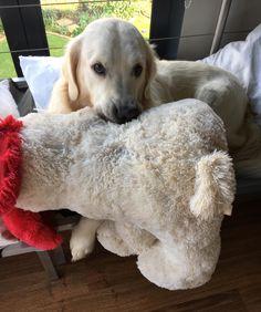 Even big boys need fluffy toys http://ift.tt/2mrar3o