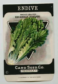 Antique Card Seed Company   Endive