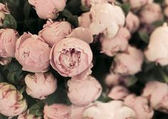 Paris+photography+pink+peonies+Flower+photograph+Paris+by+Raceytay,+$15.00