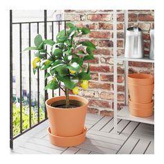 "INGEFÄRA Plant pot with saucer - outdoor/terracotta, 9 ½ "" - IKEA"