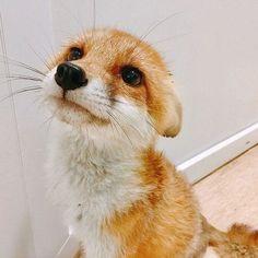 Cute Little Animals, Cute Funny Animals, Cute Cats, Cute Creatures, Beautiful Creatures, Animals Beautiful, Nature Animals, Animals And Pets, Fennec