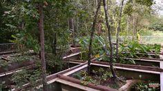 Tortoise Enclosure, Reptile Enclosure, Tortoises, Turtles, Wood, Plants, Animals, Ideas, Reptiles And Amphibians