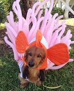 Creative costume ideas for dogs: Clown Fish and Anemone Dogs Costume