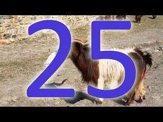 Gerçek Din 25/40 : Dini Oyuncağa Çevirme: Nasih-Mensuh - YouTube