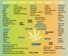 US~Observer - Industrial Hemp Production The Revolution America ...