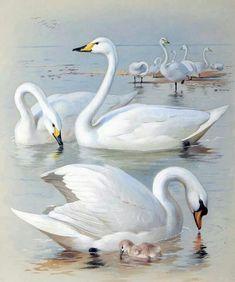 Resultado de imagem para swans paintings