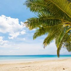 Whether you're looking for a romantic getaway on the secluded beaches of the Andaman Islands off India, a boutique retreat in Mexico or a family-friendly holiday in the Maldives, we've rounded up the hottest spots for some winter sun in 2020 Boutique Retreats, A Boutique, Winter Sun Holidays, Havelock Island, Places To Travel, Places To Visit, Andaman And Nicobar Islands, Family Friendly Holidays, Secluded Beach