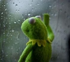 kermit sad at DuckDuckGo Sapo Kermit, Bae Meme, Missing Bae, Be Like Meme, Old Teacher, Sometimes I Wonder, Kermit The Frog, Cool Pets, Animal Quotes