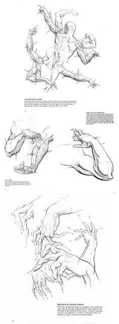 Drawing Dynamic Hands : Burne Hogarth