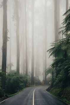 I Love the tree lined, mist shrouded road...such a mysterious feel to it More