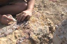 Les ossements d'un dinosaure inconnu  découverts près d'Aix-en-Provence