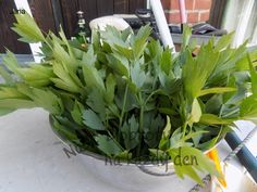 Korn, Kraut, Celery, Pesto, Food And Drink, Herbs, Homemade, Vegetables, Drinks