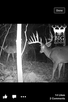 That's the kind of trail camera picture you flip to and, without warning, scream and jump out of your seat. What a monster.