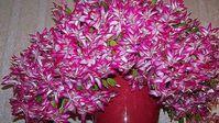 Stačí 1 lžička tohohle roztoku a pokojové rostliny pokvetou jako nikdy předtím! Geniální trik jak vytvořit účinnou domácí zálivku! | Vychytávkov Pest Control, Planting Succulents, Succulent Plants, Interior Design Living Room, Houseplants, Organic Gardening, Christmas Wreaths, Floral Wreath, Holiday Decor