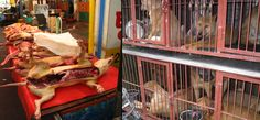 Many petitions to sign to stop S. Korean dog meat