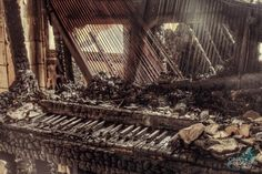 Rotting Organ - Gina Soden PhotographyGina's just got a 5 year membership with the Groucho Club in London and will soon be exhibiting ...