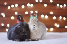10 Bunnies That Will Get You In The Christmas Spirit