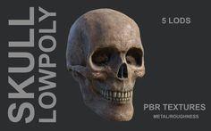 Lowpoly Skull Model in Anatomy 3d Anatomy, Skull, Models, Templates, Skulls, Sugar Skull, Fashion Models