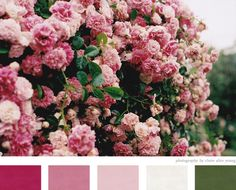 Pretty pink flowers By claire alice young via creature comforts faves Pretty In Pink, Beautiful Flowers, Pretty Roses, Beautiful Gardens, Beautiful Things, Pink Roses, Pink Flowers, Pink Hydrangea, Pink Petals