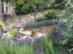 Motif Garden Design - lavender planting in the new town Edinburgh Scotland, Planting, Design Projects, Garden Design, Lavender, Outdoor Decor, Nature, Beautiful, Courtyards