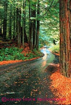Redwood Forest California.I want to go here one day.Please check out my website thanks. www.photopix.co.nz