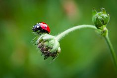 Ladybug in green/Coccinelle dans le vert by Didier Vacher on 500px