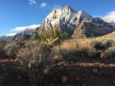 Red Rock National Conservation Area Just outside of Las Vegas. [OC] [4032 x 3024]