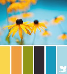 flora brights black eyed susan color palette via design seeds Scheme Color, Colour Pallette, Color Palate, Colour Schemes, Color Patterns, Color Combos, Design Seeds, Color Concept, Colour Board