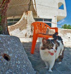 Laughing Cat. Kos, Greece.  © Chris Trew / Plastic Cameras 2012