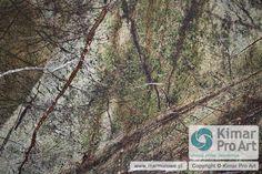 Rain Forest Green 60x120