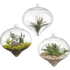hanging glass terrarium in vases | CB2 $6.95 each - as an idea to hand from ceiling in conference room along back wall.